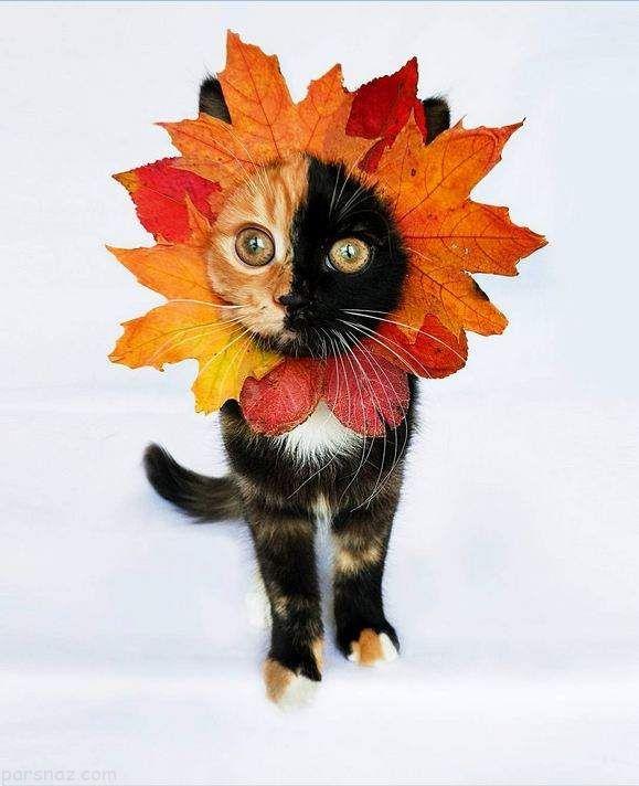 یانا گربه زیبا و بانمک که خبرساز شده است