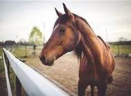 نکات جالب و خواندنی درباره زندگی اسب ها