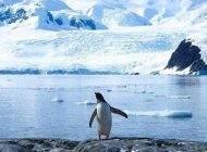 بدن پنگوئن ها آب دریاها را تصفیه می کند