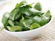 همه چیز درباره کلروفیل علت سبز بودن گیاهان