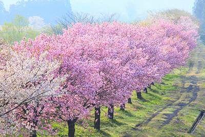 عکس هایی از زیبایی های بهار در سراسر جهان