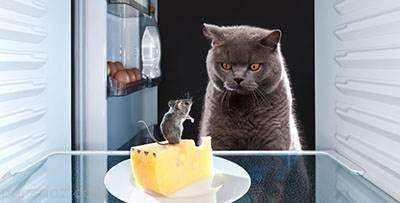 تاثیر خوردن پنیر در کاهش وزن افراد