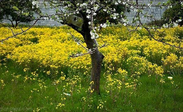 عکس های زیبا و دیدنی از فصل بهار در مازندران