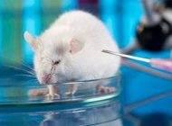 درمان دیابت نوع یک در آزمایشگاه به صورت قطعی