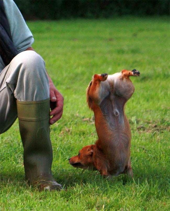 برندگان مسابقه عکس های خنده دار حیوانات