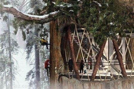 ساخت آسمان خراش بزرگ داخل یک درخت