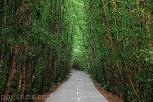 سفر به جنگل دالخانی بهشت رویایی رامسر