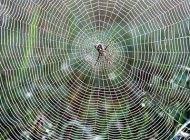 داستان زیبا و آموزنده مگس و عنکبوت
