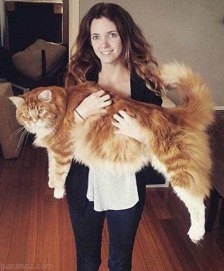 بزرگترین گربه جهان روزی چقدر غذا می خورد؟