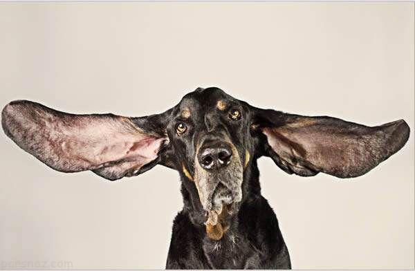 رکوردهای گینس که حیوانات به ثبت رسانده اند