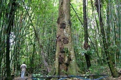 دفن جسد کودک در تنه درخت جنجالی شد
