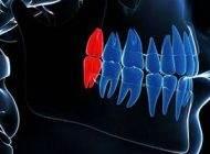 8 اندام بلا استفاده بدن انسان را بشناسید