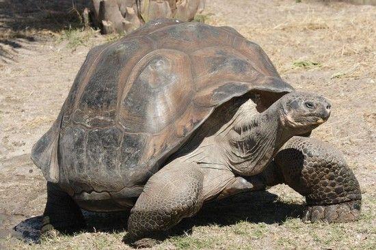 جاندارانی که بیشترین طول عمر در جهان را دارند
