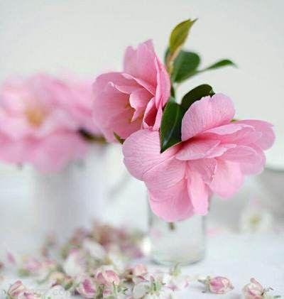 متن زندگی زیباست برای فصل تابستان
