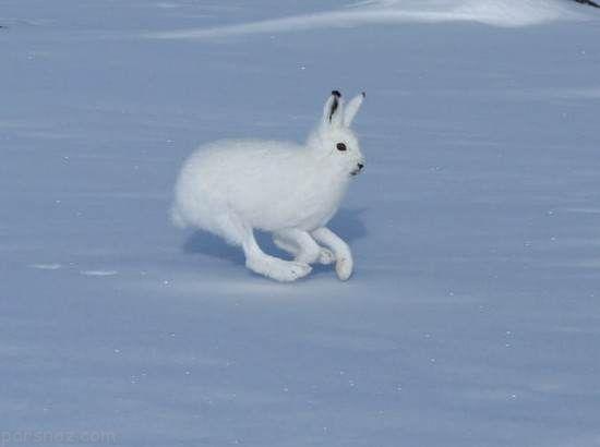 عجیب ترین حیوانات غیرعادی در جهان را بشناسید