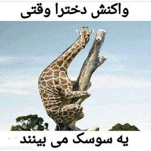 خنده دارترین عکس ها و سوژه های طنز ایرانی (225)