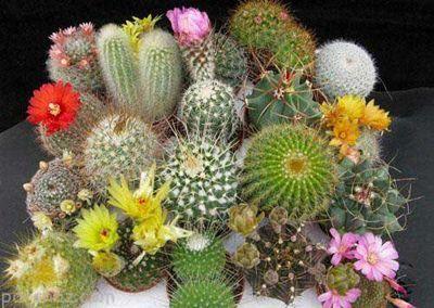 راه های تازه نگه داشتن گیاهان آپارتمانی
