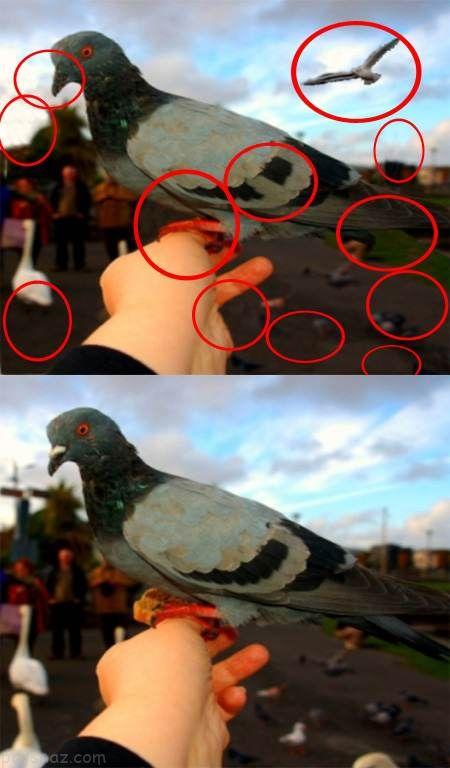 تست هوش تصویری جدید پیدا کردن تفاوت عکس ها