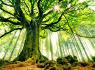 بهترین شعرهای ناب از احمدرضا احمدی