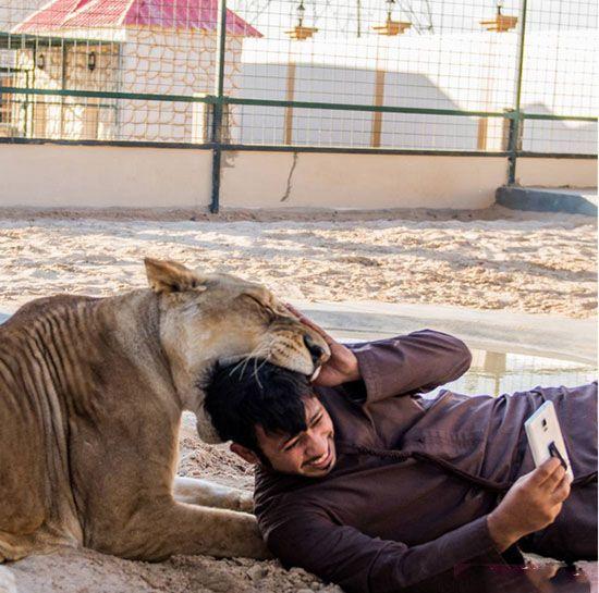 زندگی جوان ثروتمند اماراتی با حیوانات وحشی در خانه