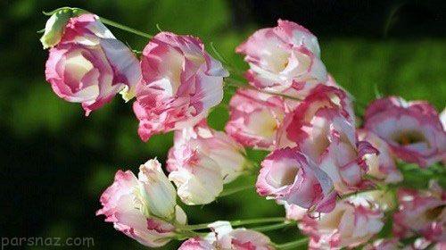 گران قیمت ترین گل های دنیا را بشناسید