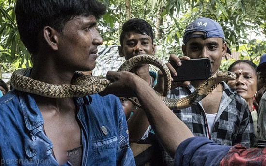 فستیوال هولناک الهه مار در هندوستان +عکس