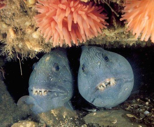 جانوران وحشتناک اعماق اقیانوس ها را بشناسید