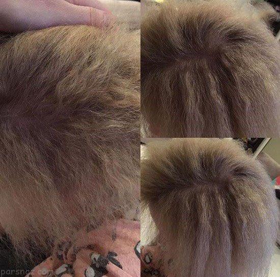 موهای این دختر هیچوقت مرتب و شانه نمی شود
