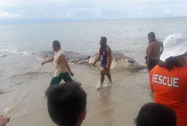هیولای دریایی بزرگ و وحشتانک در فیلیپین