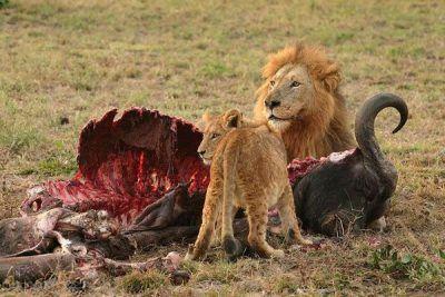 خطرناک ترین جانداران روی زمین را بشناسید
