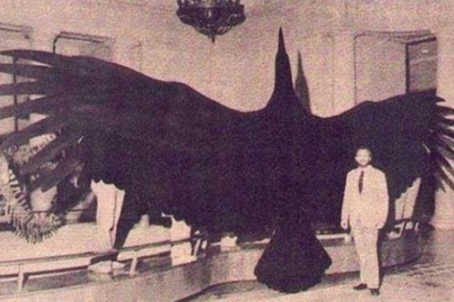عظیم ترین مخلوقات جهان را بشناسید +عکس