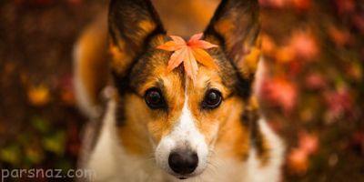 نکات کاربردی درباره مراقبت از سگ ها