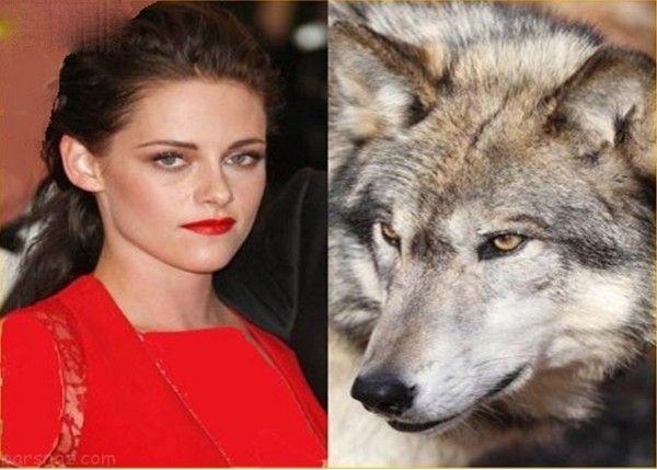 بازیگران هالیوود و حیوانات خانگی عجیب و غریب