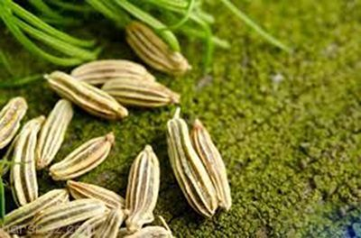 درباره گیاه دارویی رازیانه و خواص معجزه آسای آن