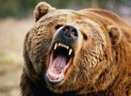 داستان وحشتناک مردی که خرس صورتش را خورد +عکس