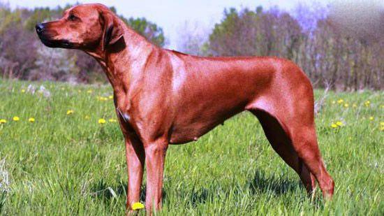 ترسناک ترین نژادهای سگ در جهان را بشناسید
