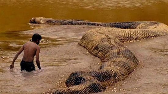 وحشتناک ترین موجودات غول پیکر جهان را بشناسید