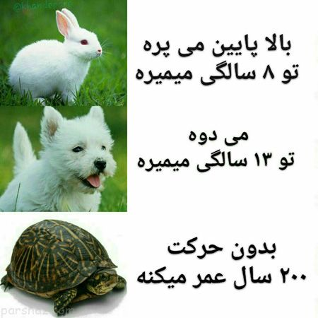 Image result for ‫عکس نوشته خنده دار‬‎