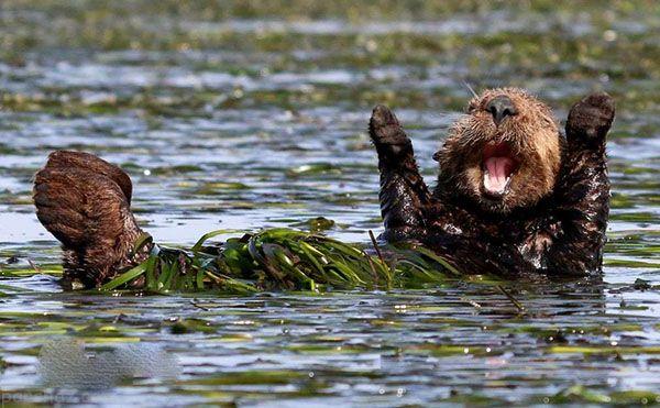 خنده دارترین عکس های طنز حیوانات در سال 2018