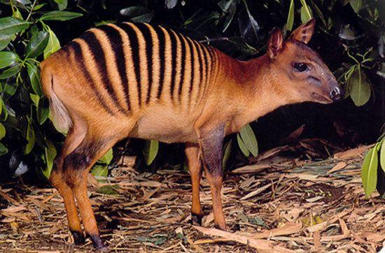 عجیب ترین حیوانات نایاب کره زمین را بشناسید