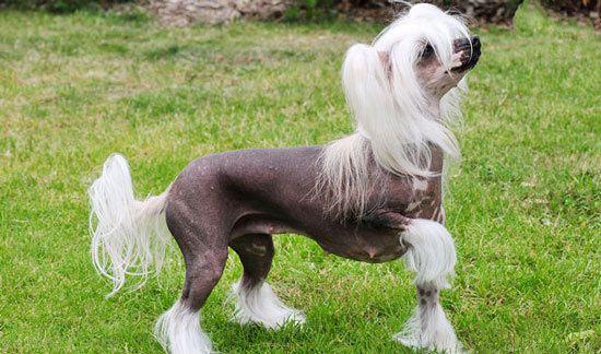 بهترین نژادهای سگ در تمام دنیا را بشناسید