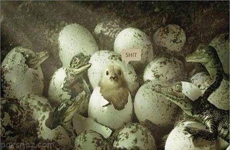 عکس های خنده دار خفن |بهترین و جالب ترین عکس های خنده دار روز ایران (296)