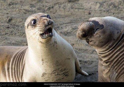 عکس های خنده دار | خنده دارترین و باحال ترین سوژه های روز ایرانی (302)