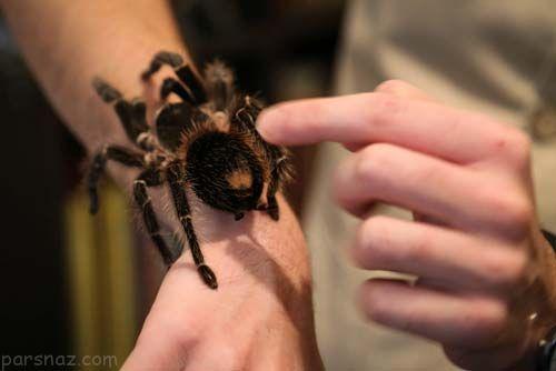 همراه با مرد عنکبوتی ایران و کارهای ترسناکش +عکس