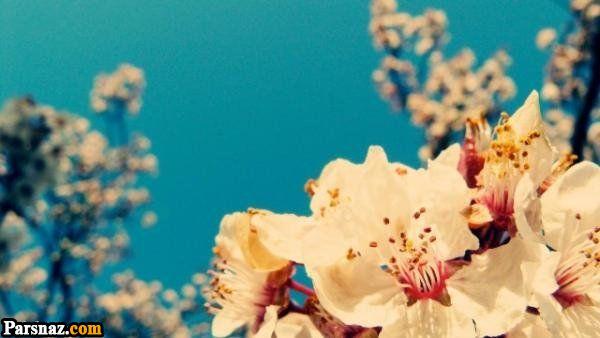 عکس 122 گل زیبا در رنگ های زیبا | عکس های انواع گل (عکس پروفایل گل)