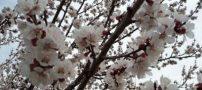 شعرهای ناب و زیبا درباره بهار و گل های بهاری | اشعار زیبای بهار