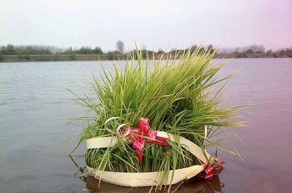 روز 13 بدر (روز طبیعت) چرا سبزه را در آب می گذارند (سیزده بدر)