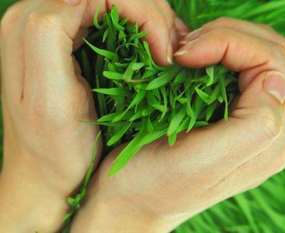 چرا در روز سیزده بدر (روز طبیعت) سبزه را گره میزنند   فلسفه گره زدن سبزه در ۱۳ بدر