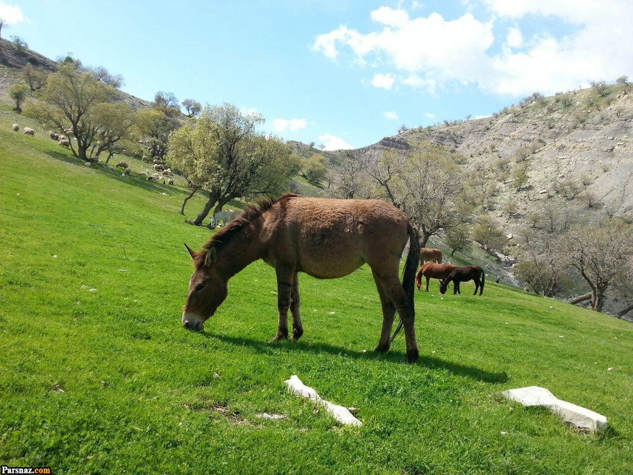 عکس های زیبا از طبیعت بهاری | تصاویر فصل بهار | پروفایل طبیعت فصل بهار