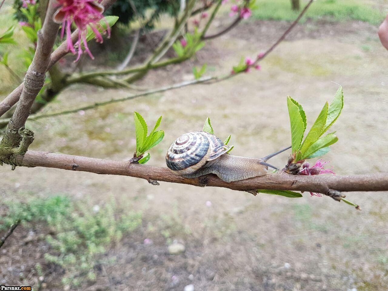 عکس های پروفایل فصل بهار